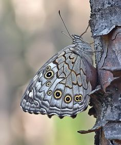 Lattice Brown | Flickr - Photo Sharing!