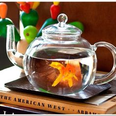 Tea pot fish tank, must have with a pretty beta fish
