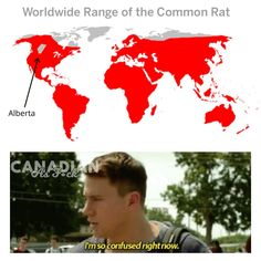 Canadian Memes, What Is Like, Make It Yourself, Creative, How To Make