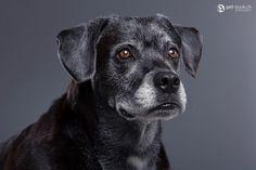 www.pet-book.ch