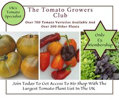 The Tomato Growers Club – The Tomato Specialist Tomato Growers, Varieties Of Tomatoes, Tomato Plants, I Shop, Join, Public, How To Get, Club, Website