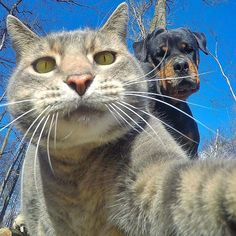 Manny the selfie-taking cat.