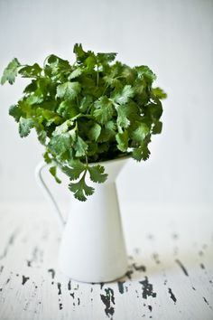 cilantro | Playful Cooking
