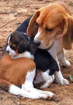 Beagle knuffel