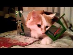 A cat in a box:  The perfect cure for what ails you.