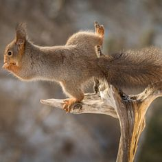 It's all about balance #squirrel