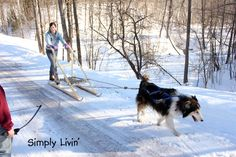 Homemade dog sled. I hope my kids grow up to be creative and do fun stuff like this :)
