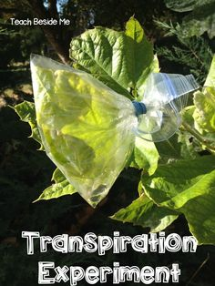 This post may contain affiliate links.Did you know that plants transpire? It is kind of like perspiring, but not quite. We did a little leaf transpiration experiment this week that was really cool. I have never done this one before, but it was in my son's preschool curriculum. We loved it and I was surprised …