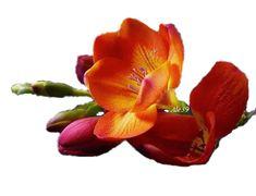 Wiersze,Gify Na Dzień Dobry ...: Gify na dzien dobry - kwiaty Vegetables, Plants, Vegetable Recipes, Plant, Veggies, Planets