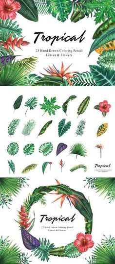 Tropical Clipart, Tropical Watercolor x Colored Pencil Leaves, Green Foliage, Mo… - Modern Plant Aesthetic, Flower Aesthetic, Leaf Flowers, Colorful Flowers, Tropical Leaves, Tropical Plants, Tropical Animals, Plant Tattoo, Room With Plants