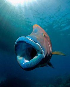 sea life - sea life photography - sea life underwater - sea life artwork - sea life watercolor sea l Beautiful Sea Creatures, Deep Sea Creatures, Animals Beautiful, Deep Sea Animals, Under The Sea Animals, Underwater Creatures, Underwater Life, Planeta Animal, Fauna Marina