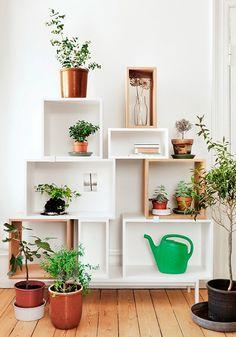 Estantes con plantas