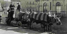 Ruth Matilda Anderson (Nebraska 1893–1983 New York): Carretando Naranjas para el mercado de Lugo (1925)