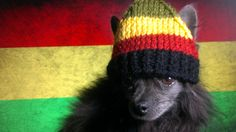 Hey, I found this really awesome Etsy listing at https://www.etsy.com/listing/162787674/reggie-dog-hat
