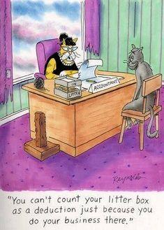 New cats humor cartoon hilarious Ideas Funny Cartoons, Funny Comics, Crazy Cat Lady, Crazy Cats, Funny Animal Pictures, Funny Animals, Taxes Humor, Mortgage Humor, Mortgage Tips