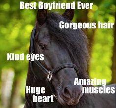 New Cute Pet Names For Boyfriend Funny 35 Ideas Funny Horse Memes, Funny Horse Pictures, Funny Horses, Cute Horses, Funny Animal Memes, Pretty Horses, Horse Love, Beautiful Horses, Funny Animals