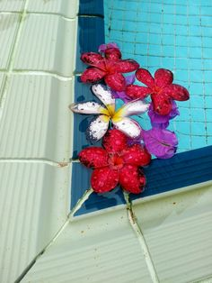 fallen flower swimming pool images download full free high size resolution