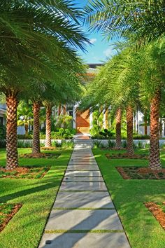 25 Perfect Small Front Yard Landscaping Ideas with Pathways for Spring That You'll Love Palm Trees Landscaping, Small Front Yard Landscaping, Tropical Landscaping, Tropical Garden, Backyard Landscaping, Landscaping Ideas, Palm Trees Garden, Natural Landscaping, Garden Landscape Design