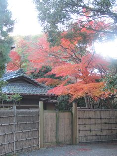 At near Kamakura-gu shrine. Fine color of autumn.