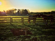 Rory Feek Shares Image of Joey's Grave on the Family Farm: 'Bright Sunrise Will Contradict the Heavy Fog that Weighs You Down'  Country, Joey Feek