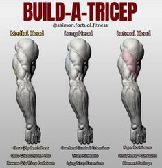 "BUILD-A-TRICEP! First off let's give you some info on how the tricep is broken down, there's three parts to the tricep, hence ""tri"". There's the medial head, which is very small and lies beneath the long head), the larger portion of the horseshoe the long Fitness Workouts, Gym Workout Tips, Weight Training Workouts, No Equipment Workout, Fitness Tips, Health Fitness, Traps Workout, Biceps Training, Muscle Workouts"