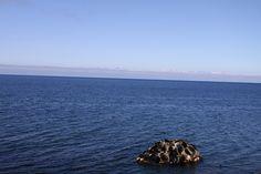 Seal on the Lake Baikal