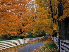 Good white fence at this Autumn lane
