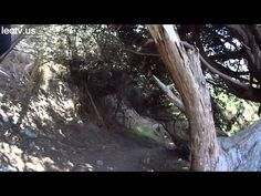 San Francisco is rich in spectacles - take a virtual tour right now! (picture: 2150 Lands End Trail) Lands End Trail, Virtual Tour, Landing, San Francisco, Tours, Plants, Pictures, Photos, Planters