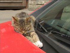 wind screen sleeping cat