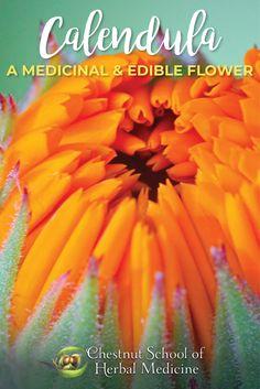 Calendula: An Edible and Medicinal Flower  #calendulaofficinalis #herbalist #herbalife #herbalism #herbalmedicine #herbs #edibleflowers