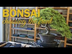 Bonsai Design: How to Choose a Front on your Bonsai Tree - YouTube
