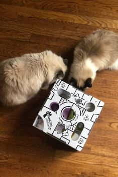 These are the best puzzle toys for cats | Cat Puzzle Toys | Cat Puzzle Feeder | Cat Puzzle Feeder DIY | Cat Puzzles DIY | Cat Toys | Cat Toys DIY | Cat Toys to Buy | Cat Toys Handmade | Puzzles for Cats | Food Puzzles for Cats | DIY Food Puzzles for Cats | Treat Puzzles for Cats | Toys for Cats Ideas | Best Cat Toys | Best Cat Toys Products | Cats Playing | Cat Supplies | Cat Tips | Animal and Pet Supplies Homemade Cat Toys, Diy Cat Toys, Pet Toys, Cat Puzzle Feeder, Best Interactive Cat Toys, Cat Presents, Cats Playing, Kitty Games, Cat Accessories