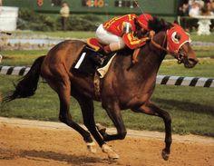 Cannonade winning the 22 runner 1974 Kentucky Derby.