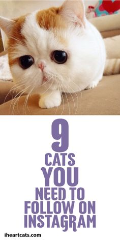 9 Cats You Need To Follow On Instagram