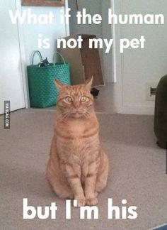 This Cat Has Been Freed From The Matrix funny animals cats pets lol humor funny pictures funny photos funny images hilarious pictures Funny Animal Jokes, Funny Cat Memes, Cute Funny Animals, Animal Memes, Funny Cute, Cute Cats, Funniest Animals, Funny Pet Quotes, Silly Cats