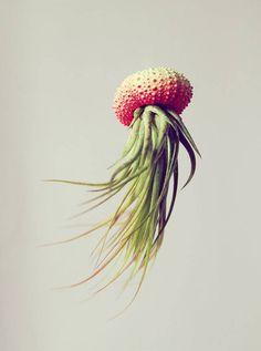 Petit Beast: Hanging air plant sculptures look like graceful jellyfish : TreeHugger