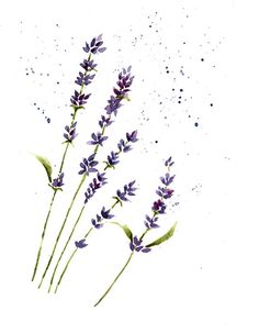 Lavender Print From Original Water Lavender by wrensroost on Etsy, $14.00