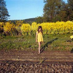 Anna Mia Davidson, Eden with Golden Rods, 2012,