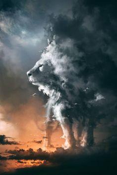 Lion King's Mufasa by zbush on DeviantArt Lion King Pictures, Lion Images, Lion Wallpaper, Animal Wallpaper, Animal Photography, Nature Photography, Photography Photos, Amazing Animal Pictures, Foto Fantasy