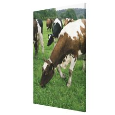 >>>Are you looking for          ima28991 gallery wrap canvas           ima28991 gallery wrap canvas online after you search a lot for where to buyHow to          ima28991 gallery wrap canvas Online Secure Check out Quick and Easy...Cleck Hot Deals >>> http://www.zazzle.com/ima28991_gallery_wrap_canvas-192625592005338244?rf=238627982471231924&zbar=1&tc=terrest