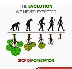 Save Our Earth, Positive Living, Trees To Plant, Mother Nature, Evolution, Life Quotes, Natural, Wildlife, Green