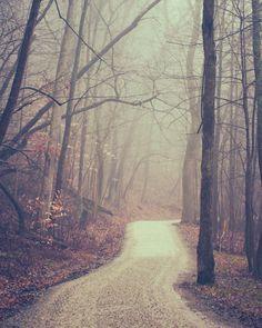Spooky Autumn Path - Foggy Lane - photography print, twisted trees, foggy halloween woods, woodland path, wall art, efpteam fpoe
