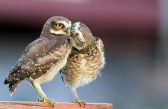 love Kiss me