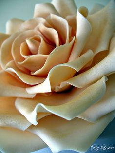 Close up of Rose   by Leslea Matsis Cakes