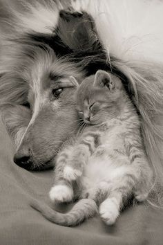 5 strange and amazing pets friendships, Click on the pic to see all