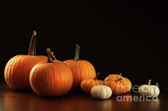 Different sized pumpkins and gourds on dark