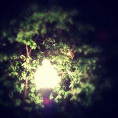 #evening #lamp #ignation #hashtagrevolution #picoftheday #photooftheday #instagram #statigram #Instamood #instagood #webstagram #tx_ignation #bestoftheday #igers #igaddict #instahug #instagramers #instagramhub #iphone  #iphone3gs #jj #ig #lymenlee #instutorial