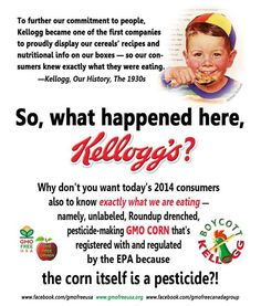 We verified Kellogg's use of GMOs when we sent Froot Loops to a genetic testing lab. The corn in Froot Loops is 100% Roundup Ready, pesticide producing GMO corn. Not only has it been sprayed with Roundup, the most toxic of 9 herbicides and pesticides recently tested, but it is registered with and regulated by the EPA because the corn itself is a pesticide. It produces Bt toxins from inside every cell of the plant and kills insects that bite into it. Food that kills?