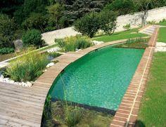aménagement de jardin avec piscine naturelle et plantes aquatiques