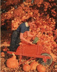Autumn Beauty 2 - 1953